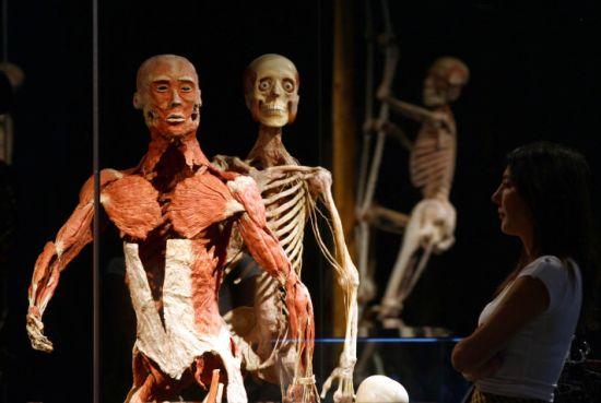 Dünyaca ünlü body worlds orijinal vücut dünyası yaşam
