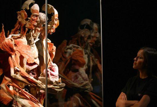 Body worlds ankaralılar ı bekliyor galerisi resim 9