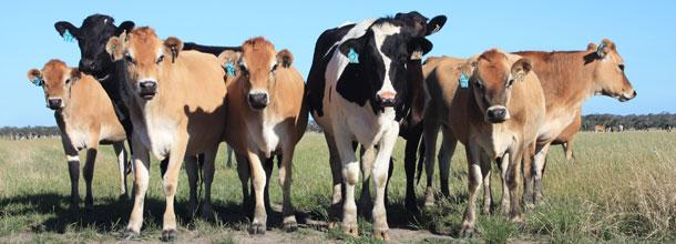 Canlı hayvan ve et ithalatı fiilen durduruldu