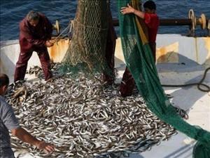 Balık fiyatları, düşüşe geçti