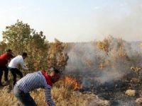 Güneydoğu'da orman yangınları: 1 şehit