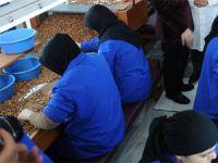 Türkiye 240 bin ton fındık ihracat etti