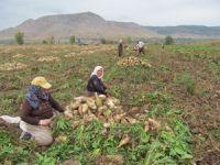 Milyonlarca lira çiftçinin kasasında kaldı