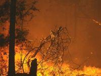 Yangında 25 hektar orman kül oldu