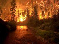 İzmir ve Manisa'daki yangınlarının bilançosu