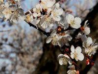 Sebze ve meyvede bahar yaşanacak
