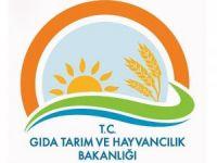 Gıda, Tarım ve Hayvancılık Bakanlığında 582 kişi açığa alındı