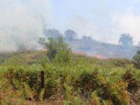 2 hektar makilik alan kül oldu