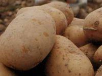 Patates tüketiminin artırılması hedefleniyor