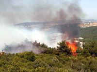 Tarım arazisinde başlayan yangın ormana sıçradı