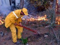 Ormanları cehalet yaktı