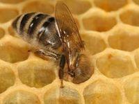 Arılar bal mesaisine başladı