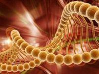 Alkol 7 tür kanserin nedeni