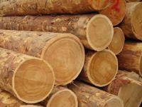 Orman ürünlerinde 60 yıllık tebliğ değişiyor