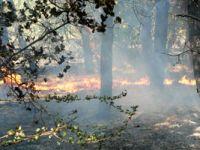 Çamlıyayla'da orman yangını