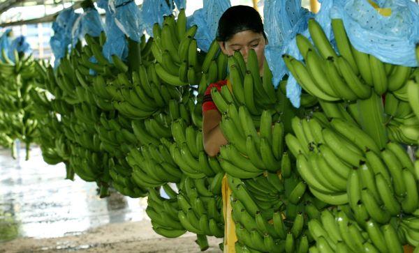 bananass.jpg
