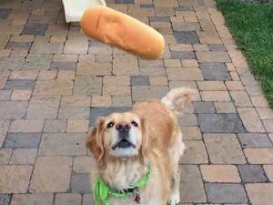 Bu da dünyanın en beceriksiz köpeği