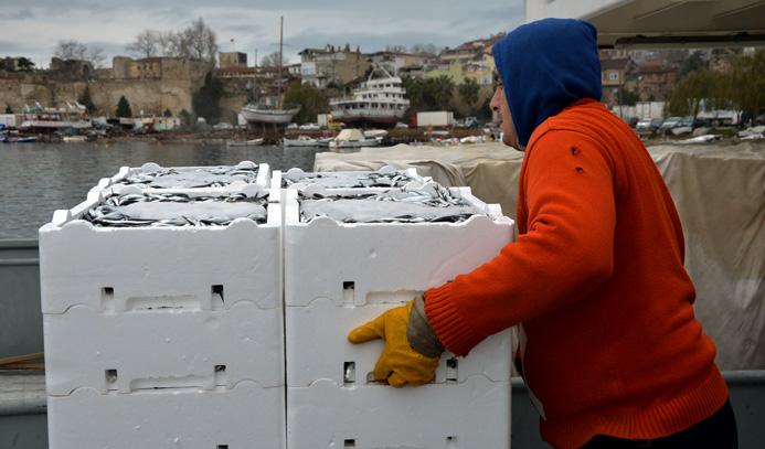 Karadeniz'de palamut arttı hamsi azaldı