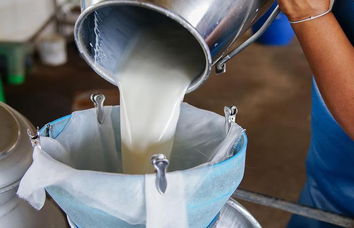 Çiğ süt destek ödemeleri başlıyor